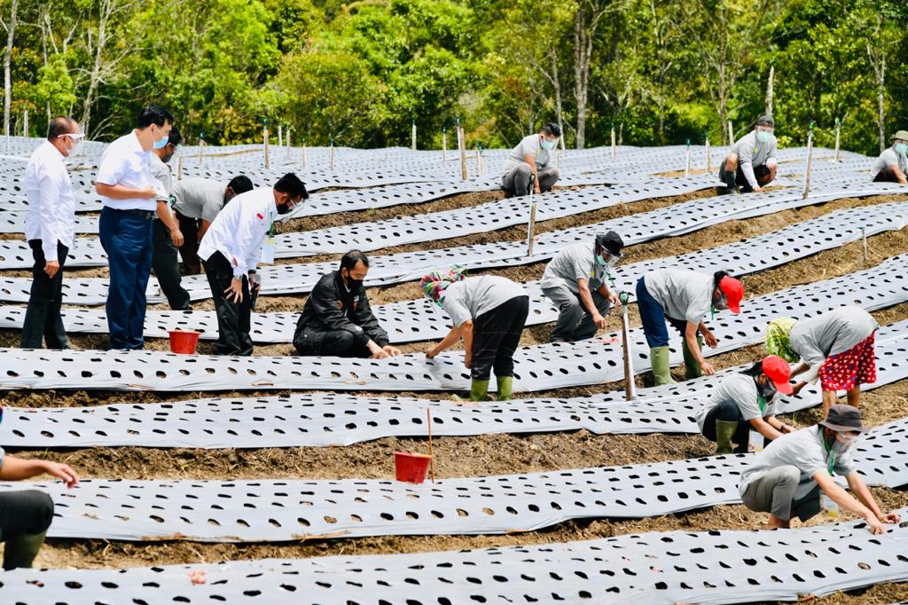 Presiden Jokowi Tinjau Kawasan Lumbung Pangan Baru di Sumatera Utara